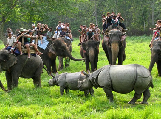 CHITWAN TOUR & JUNGLE ACTIVITIES