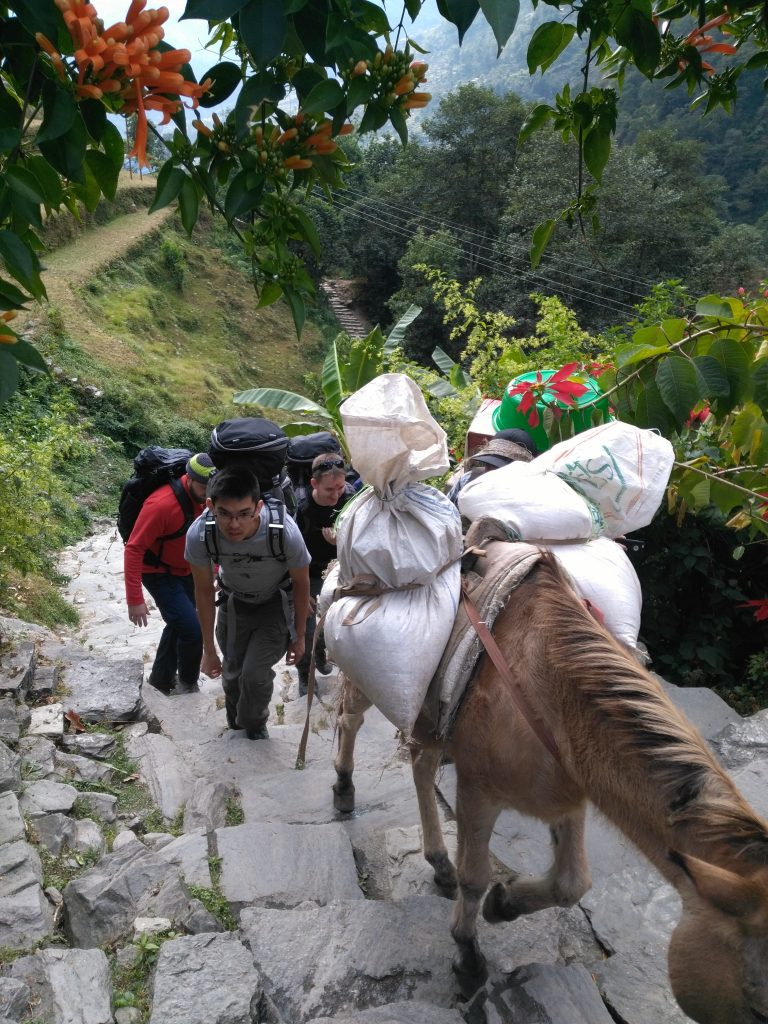 Horse carrying loads