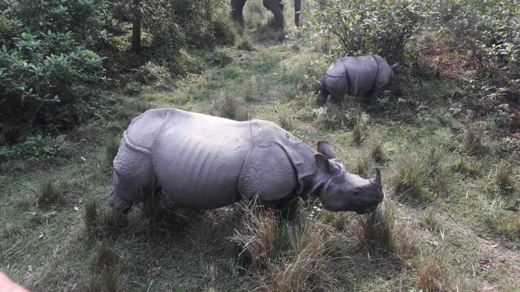 Chitwan-National-Park-One-horned-Rhino-and-its-baby